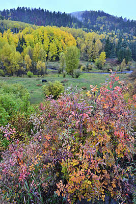Photograph - Fall Colors Along Dallas Creek Road by Ray Mathis