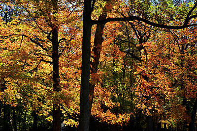 Photograph - Fall Colors Along Des Plaines River by Ray Mathis