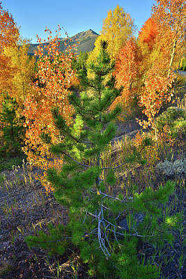 Photograph - Fall Colors Along Dillon Reservoir by Ray Mathis