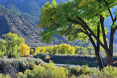 Photograph - Fall Colors Along Eagle River Near Gypsum by Ray Mathis