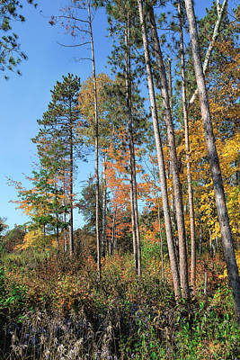 Photograph - Fall Colors Along The Norway Beach Loop by John M Bailey