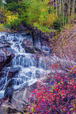 Photograph - Fall Colors Along Tioga Creek by Lynn Bauer