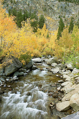 Fall Colors And Rushing Stream - Eastern Sierra California Art Print by Ram Vasudev