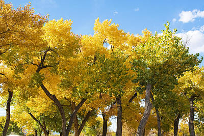 Photograph - Fall Colors Arizona by Waterdancer