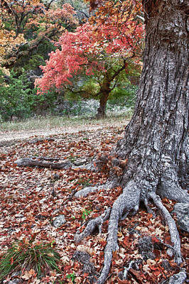 Photograph - Fall Colors At Lost Maples by James Woody