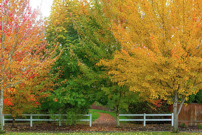 Photograph - Fall Colors At Park Entrance In Suburban Neighborhood by David Gn