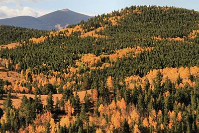 Photograph - Fall Colors At Rocky Mountain National Park by Dan Sproul