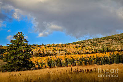 Photograph - Fall Colors At Snowbowl by Robert Bales