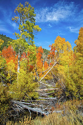 Photograph - Fall Colors At Summer's Meadow Creek by Lynn Bauer