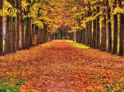 Fall Colors Avenue Art Print