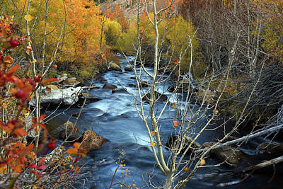 Fall Colors Bishop Creek Art Print by Dung Ma