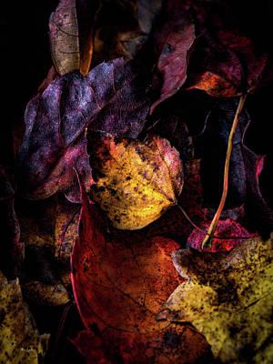Photograph - Fall Colors by Bob Orsillo