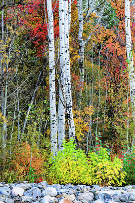 Photograph - Fall Colors by Bryan Carter
