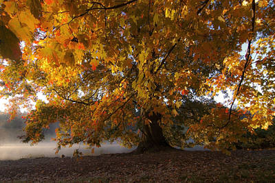 Wilderness Camping - Fall colors by Lake Marengo by Sven Brogren