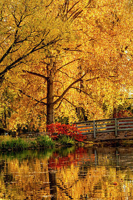 Photograph - Fall Colors By The Pond by Teri Virbickis