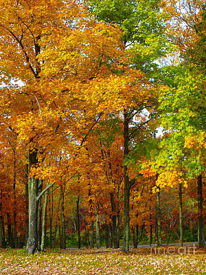Christmas Patents Rights Managed Images - Fall Colors Royalty-Free Image by Carole L Parker