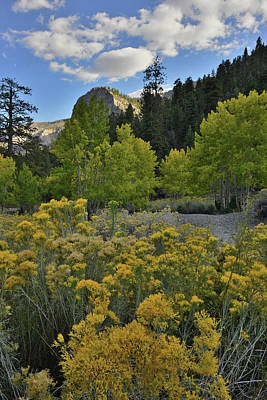 Photograph - Fall Colors Come To Mt. Charleston In Nevada by Ray Mathis