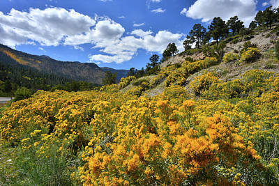 Photograph - Fall Colors Come To Mt. Charleston by Ray Mathis