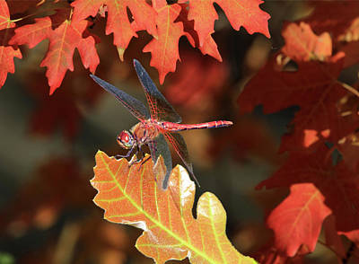 Darter Photograph - Fall Colors by Donna Kennedy