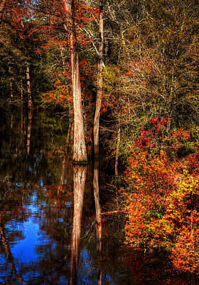 Photograph - Fall Colors  by Ester Rogers