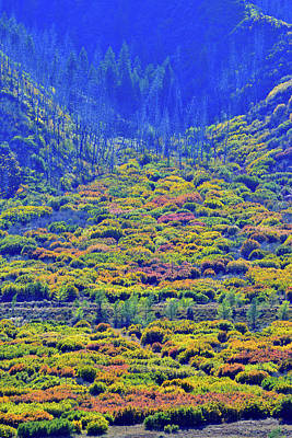 Photograph - Fall Colors Fan Out In Glenwood Springs by Ray Mathis