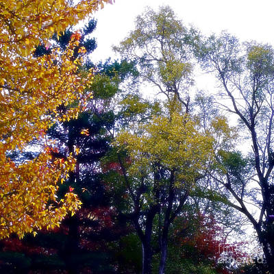 Frank J Casella Royalty-Free and Rights-Managed Images - Fall Colors by Frank J Casella
