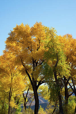Photograph - Fall Colors by Frank Madia