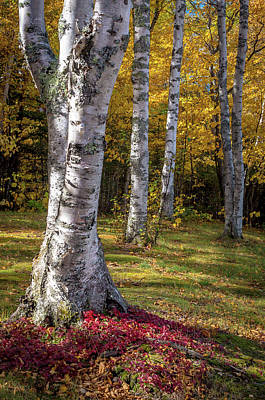 Photograph - Fall Colors by Gary McCormick