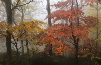Photograph - Fall Colors Glowing by Ken Barrett
