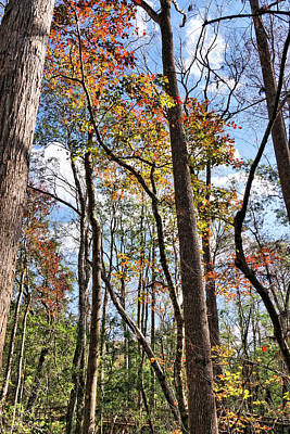 Fall Colors In A Florida Forest Art Print by John Trommer