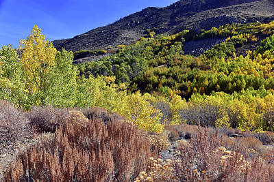 Fall Colors In Bishop Creek  Art Print by Dung Ma