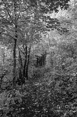 Fall Colors In Bw Oberg Mountain North Shore Minnesota Art Print