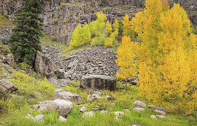 Photograph - Fall Colors In Colorado by Kunal Mehra