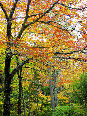 Fall Colors In Maine 1 Art Print by Jonathan Hansen