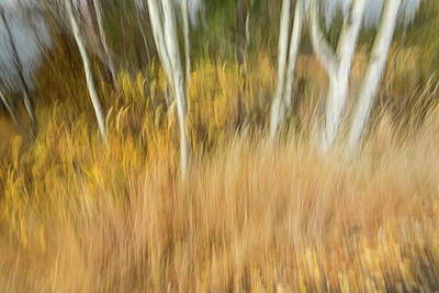 Photograph - Fall Colors In Motion by Rick Strobaugh
