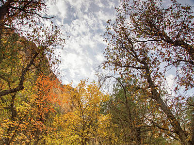 Fall Colors In The Desert Art Print by Kunal Mehra