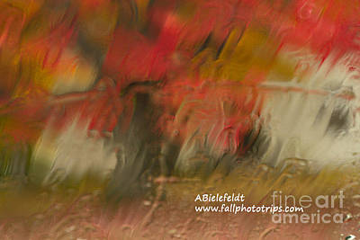 Photograph - Fall Colors In The Rain by April Bielefeldt