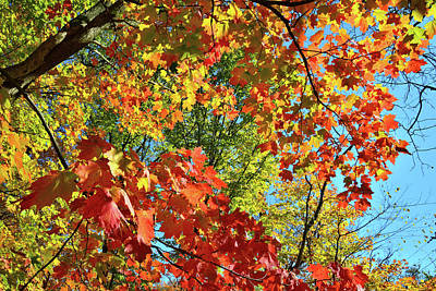 Photograph - Fall Colors In Wheeling Illinois by Ray Mathis