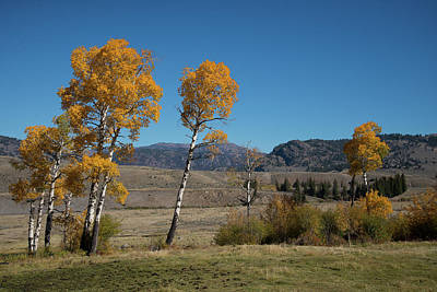 Photograph - Fall Colors In Yellowstone by Frank Madia