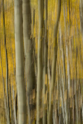 Photograph - Fall Colors by James Woody