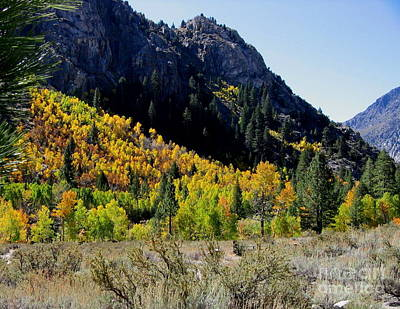 Painting - Fall Colors June Lake Loop by Larry Bacon