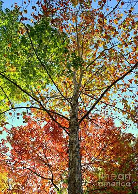 Photograph - Fall Colors by Kenny Glotfelty