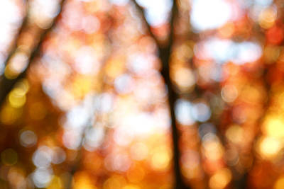 Abstract Lights Photograph - Fall Colors by Les Cunliffe