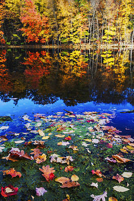 Fall Colors Near Bushkill Falls State Park Pa Usa Print by Vishwanath Bhat
