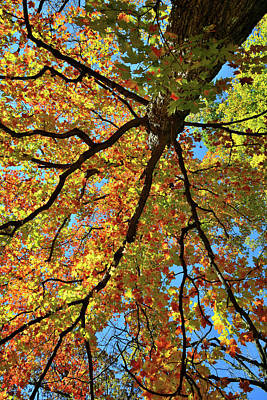 Photograph - Fall Colors Of Cook County by Ray Mathis