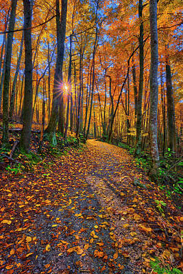 Photograph - Fall Colors On Baskin Creek Trail Head Off Roaring Fork Motor Nature Trail by Justin Kelefas