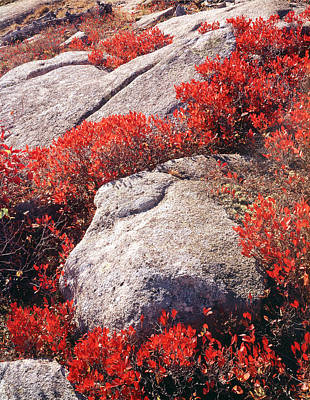 Photograph - 136207-fall Colors On Cadillac Mountain  by Ed  Cooper Photography