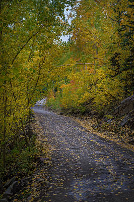 Photograph - Fall Colors On Engineer Pass by Michael J Bauer