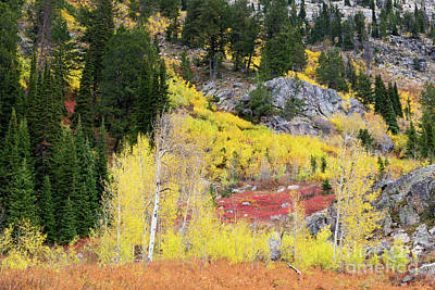 Fall Colors On Rocky Cliffs Print by Mike Cavaroc