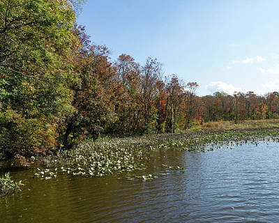 Photograph - Fall Colors On The Choptank by SG Atkinson